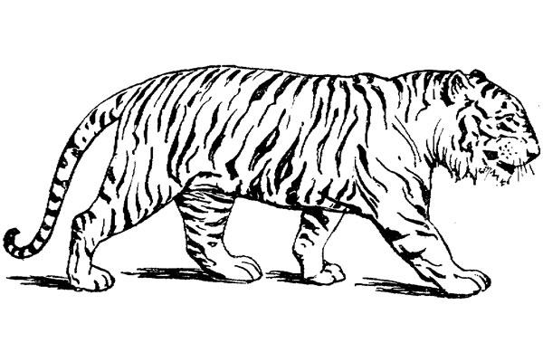 Tiger M 229 Larbilder M 229 Larbok M 229 Larbilder Princessor