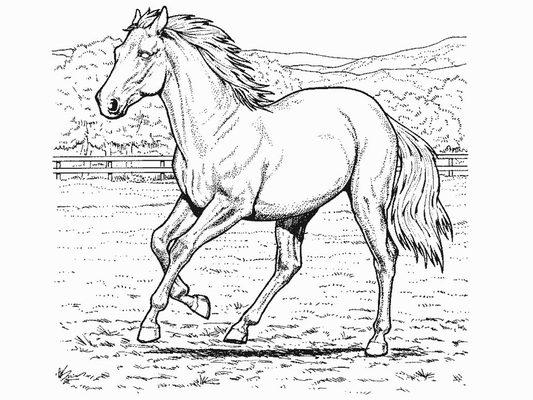 paint horse coloring pages - h star m larbilder m larbok m larbilder princessor